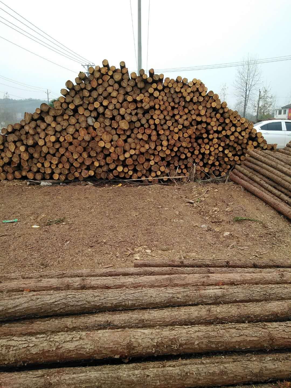 两米打桩原木