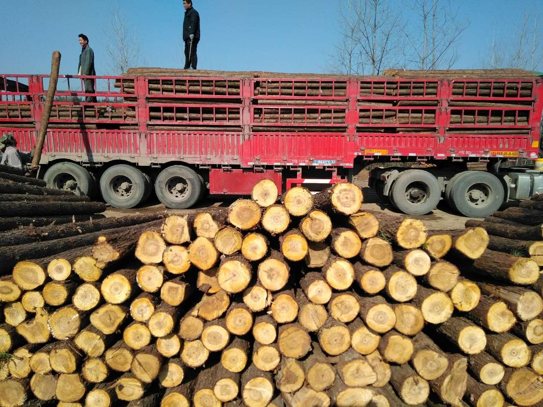 三米打桩原木